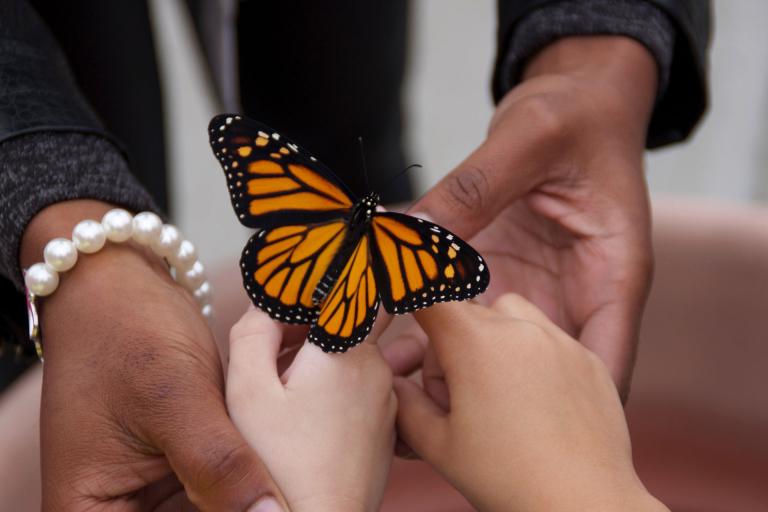 PWM teacher student releasing monarch